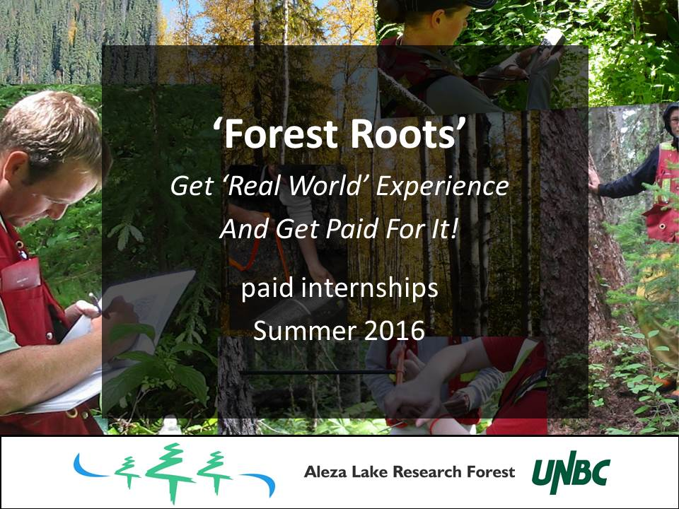 Forest Roots - Paid Internship