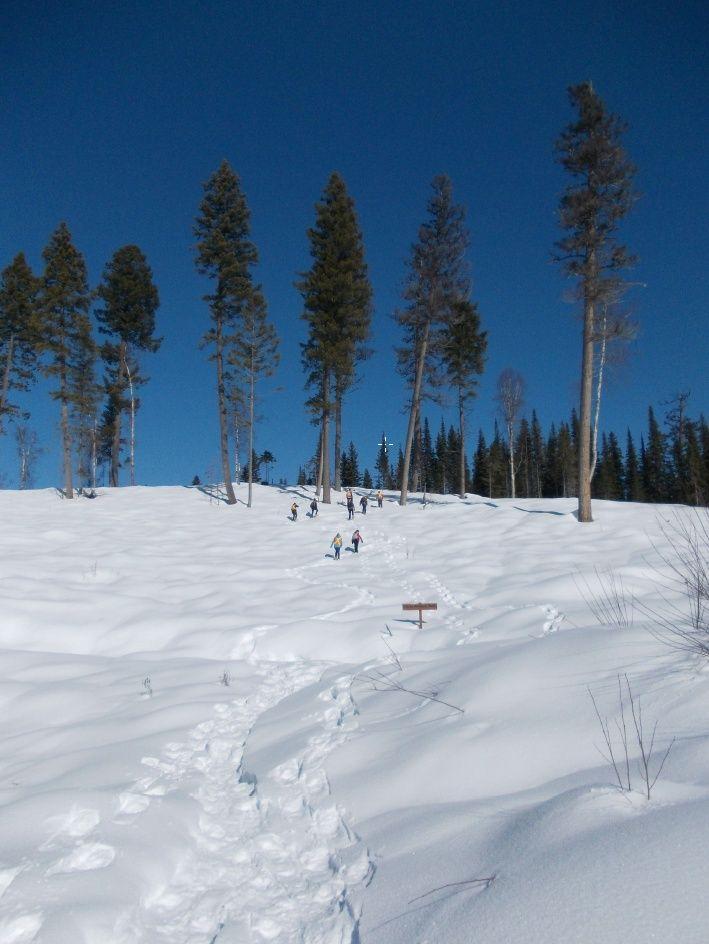 Plantation Under Snow