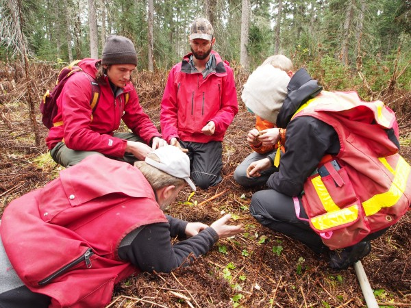 Forestry Students examine the soil in a partial harvest area
